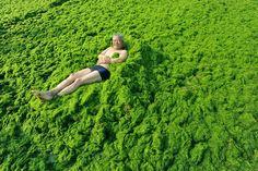 algae oil health benefits