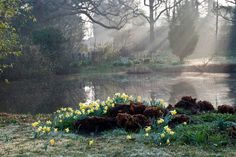 Horse Pond early morning | Great Dixter, East Sussex, UK