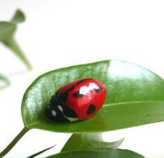 sugar paste ladybug
