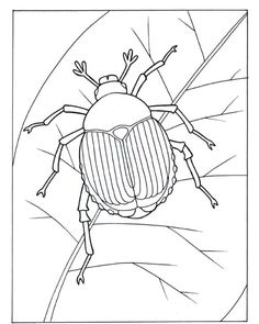 Genial Awesome Beetle Coloring Pages, Insects Coloring Pages.