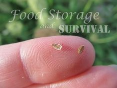 How to save carrot seeds! Food Storage and Survival