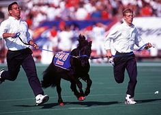 """""""Peruna"""" is the official mascot of the Southern Methodist University Mustangs. The name """"Peruna"""" is given to each successive live mascot. A black shetland pony, Peruna has been present at every SMU home football game for over 70 years."""