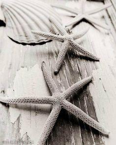 Starfish and Sea Shell Photo Nauical Decor Beach Cottage Shabby Chic Black and White Sepia Nature Macro Beach Home Art Summer 8x10 Vintage. $30.00, via Etsy.