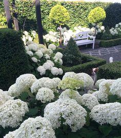 Carlo is checking his the garden  #kingcharlescavalier #mydog #garden…