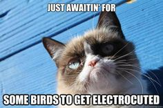 birds  kmh