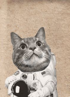 Atro cat, Illustration by EM Miljeteig Ems, Illustrations, Animals, Animales, Animaux, Illustration, Animal Memes, Animal, Animais