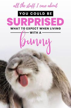 You could be surprised what to expect when living with a bunny Mini Lop Bunnies, Pet Bunny Rabbits, Holland Lop Bunnies, Pet Rabbit, Baby Bunnies, Bunny Care Tips, Lop Eared Bunny, Sleeping Bunny, Rabbit Pictures