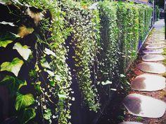 Side passage planting idea.  Waterfall plants.