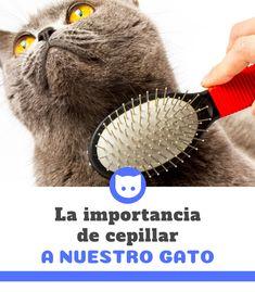 El cepillar a nuestro gato no es una práctica tan común como el cepillado  en los perros b193dba8955a