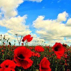 In Flanders field, the poppies grow...  Remembering all the boys who gave their lives for freedom.