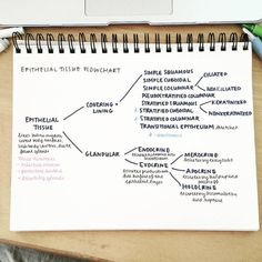 "studyallure: "" It really helps to simplify and organize things by arranging them into readable flowcharts. This is just an overview of epithelial tissues; I am hoping to make another flowchart or diagram that focuses on specific functions of the..."