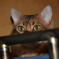 Emma: Today my whiskers stay incognito. Have a great Whiskers Wednesday anyway furriends! Don't miss a post from Yellow Eyes, Bengal, Photo S, Cats Of Instagram, Wednesday, Elsa, Selfie, Friends, Animals