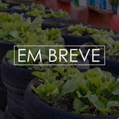 Plantaria | UOL Notícias