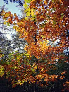 Hair Wrap Orange Leaves Harvest Ambesonne Autumn Head Scarf
