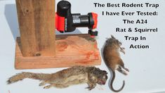 Trap Animal Coon Mouse Rat Squirrel bird Hunting Package= 3 pcs  trap Nº3