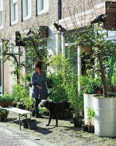Middelburg NL, urban gardening