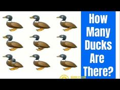 Counting Ducks Whatsapp Video Virul Puzzle Youtube In 2021 Duck Counting Puzzles How Many