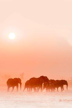 "brazenbvll: "" Wait For Me! : (Wildlight Safaris) """