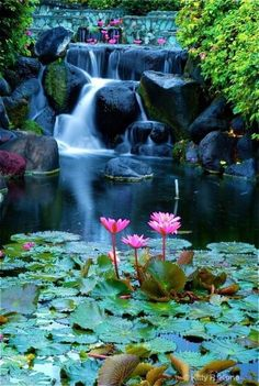 Lotus and Waterfall in Bali by Kitty R. Kono