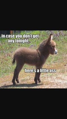 In case you dont get any tonight funny memes meme lol funny animals dirty jokes. Funny Animal Memes, Funny Animal Pictures, Funny Images, Funny Animals, Funny Pics, Animal Pics, Baby Animals, Animal Jokes, Adorable Animals