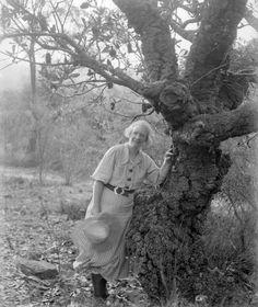 Margaret Preston, Banksia tree at Berowra.