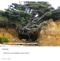 This tree is very stubborn