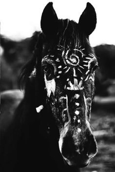 «horse, animal, and black and white»