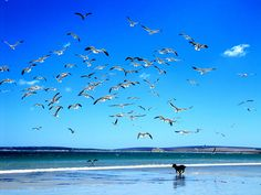 Paternoster, Western Cape Africa Day, South Africa, Culture Day, Sea Dream, Beach Scenery, Gulls, Next Holiday, Beach Town, My Land