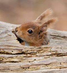 Squirrel peeping out.