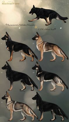 GSD Litter- Althidon x Estrella Closed by Runestorm-kennel on DeviantArt Wolf Character, Gsd Dog, Real Dog, Wolf Pictures, Furry Drawing, German Shepherd Dogs, Fantasy Creatures, Dog Design, Dog Art