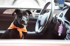 ff25909403de42 Traveling with your pets is a fun way to get out and see the world with
