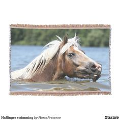 Haflinger swimming throw blanket Photo Memories, Summer Evening, Throw Blankets, Party Hats, Are You The One, Family Photos, Swimming, Horses, Animals