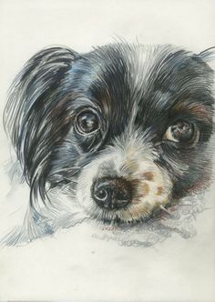 Auftragsarbeiten / commissioned works: www. All About Cats, Color Pencil Art, Pet Portraits, Colored Pencils, Dog Cat, Jacky, Pets, Drawings, Drawing Ideas