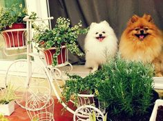 Dogs in the garden.