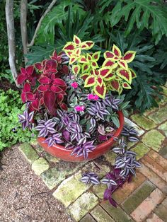 Coleus and Wandering Jew Garden Yard Ideas, Garden Projects, Garden Pots, Container Flowers, Container Plants, Container Gardening, House Plants Decor, Plant Decor, Potted Plants