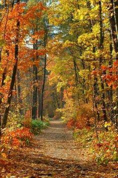 Un bosque para sobrevivir