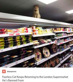 This resilient feline: | 19 Things That Will Warm Even The Coldest, Deadest Heart