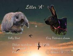Športové králiky na králičí hop :)
