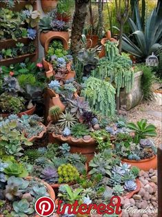 succulents beautifully combined to form a lush garden., Containers of succulents beautifully combined to form a lush garden., Containers of succulents beautifully combined to form a lush garden. Small Front Yard Landscaping, Succulent Landscaping, Succulent Gardening, Cacti And Succulents, Planting Succulents, Container Gardening, Garden Plants, Garden Landscaping, Landscaping Ideas