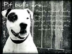 Pit bulls are