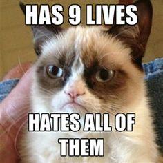 I will pin every grumpy cat i see!!!!!!
