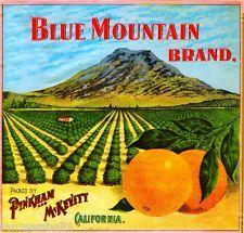 Highgrove Blue Mountain Sugar Loaf Orange Citrus Fruit Crate Label Art Print