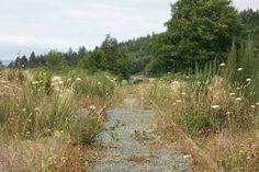 tracks - Oregon