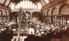 Unveiling of the Carnegie Diplodocus at the British Museum, 1905. HD. Marsh never liked the idea of exhibiting dinosaurs but after his death, major museums would begin a Dino craze.