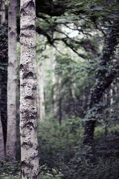http://24.media.tumblr.com/tumblr_m5v8u4VkYf1r964doo1_500.jpg