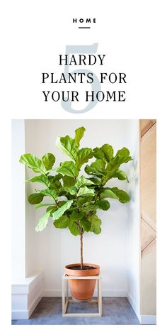 5 Hardy Plants For Your Home / eBay #spon