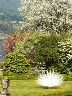 Lago Maggiore, Isola Bella, Piedmont, Italy.  We saw the beautiful white peacocks when we were here... so lovely!