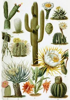 Cactus source: By the way