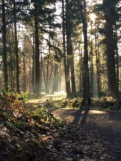 When I was walking the dog in a nearby forrest I came across this.  Felt like magic. No filter, just my phone camera.