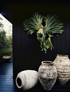 someday, once upon a time, i'll keep a staghorn fern farm in the right climate (same place mushrooms grow wild w/my peacocks on the loose :)
